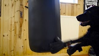 Crazy Swedish Dog - Mma Training