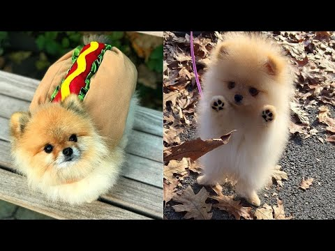 Cute and Funny Puppies | Best Funny and Cute Dog Compilation 2020 #59 | SPV Animals
