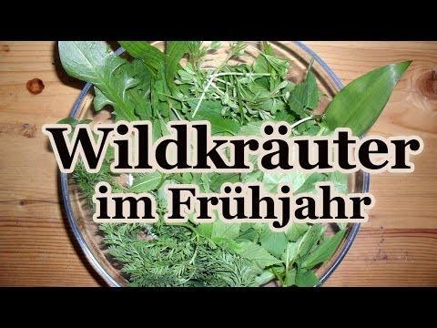 Essbare Wildkräuter im Frühjahr - Was wächst da vor meiner Haustür?