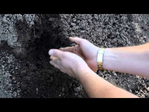 Topsoil for Sale in NJ | Bergen County, Northern NJ | Best Prices & Fast Delivery