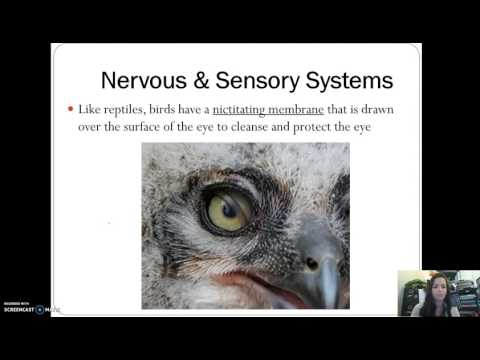 Birds - Internal Structure & Reproduction