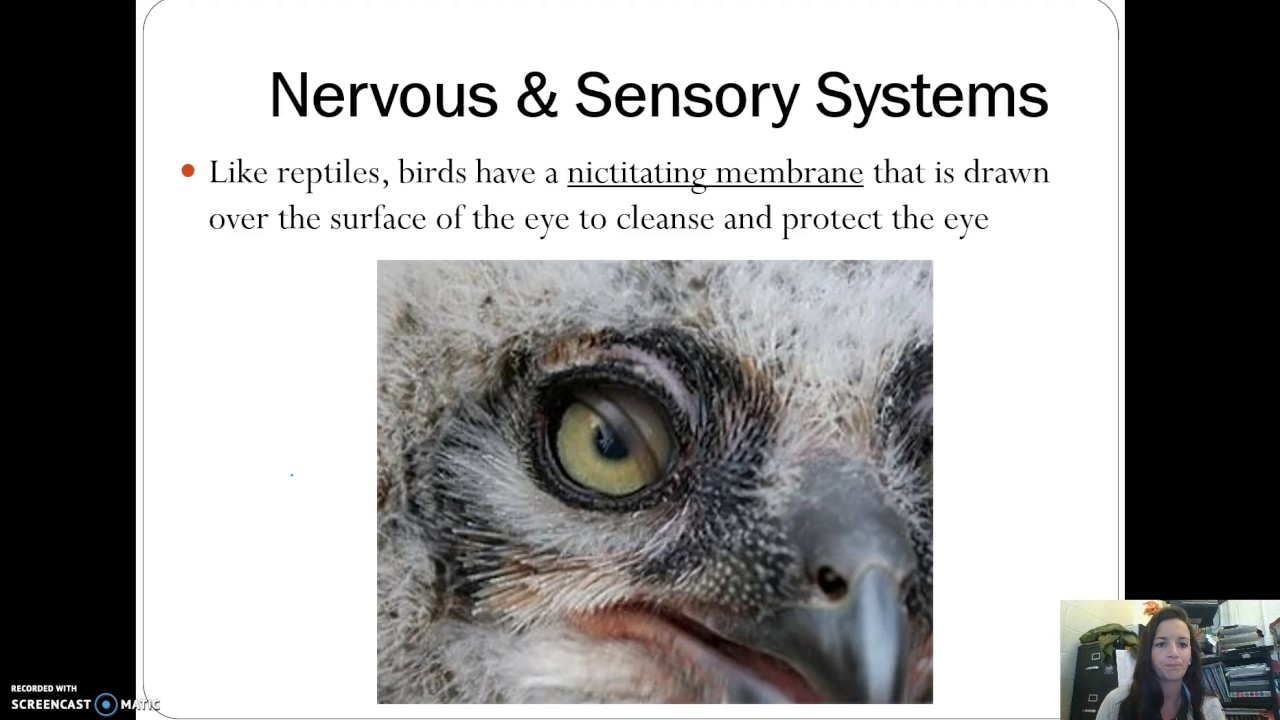 Birds - Internal Structure & Reproduction - YouTube