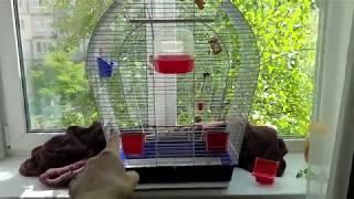 Какая клетка у Тоши и Лаймы? Ссылка в описании. Волнистые попугаи