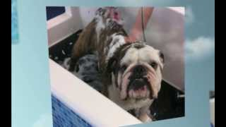 Scrubbers Dog Grooming Birmingham Call 248-584-3647 Dog & Cat Grooming Birmingham Mi
