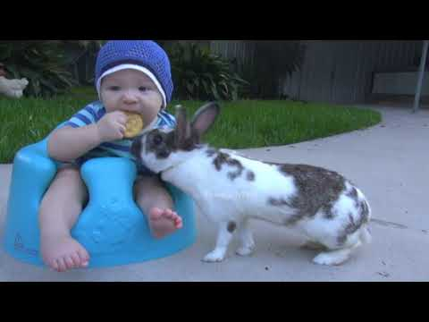 BUNNY STEALS CRACKER FROM A BABY #GIF | TexasGirly1979