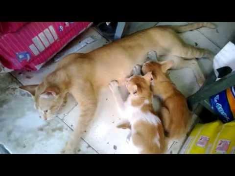 Cute cat feeding and nursing kittens | Nokia Lumia 520 Camera test HD 720p