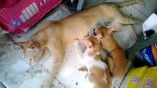 Cute cat feeding and nursing kittens | Nokia Lumia 520 Camera test HD 720p
