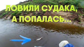 Вот это прикол, ждал судака а там она... Рыбалка на реке Вятка. Рыбалка в Кирове. (Стерлядь)