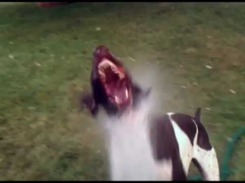 spraying dog with water