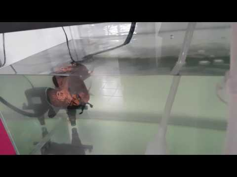 Cleaning oscar tank