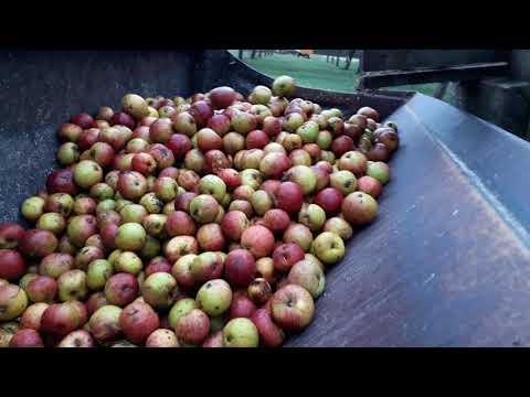 cider apples 2017
