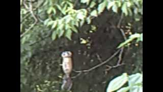 Video For Entertaining Cats - Squirrel On Soda Bottle Bird Feeder