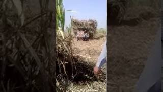 Nusar Zari Farm house Liaqat pur pakistan