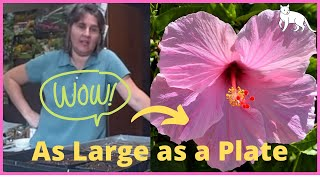 Ep 331 Planting Hardy Hibiscus From Seed Indoors