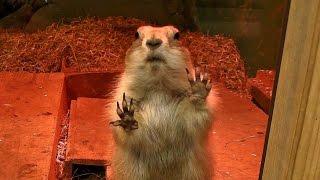 埼玉県こども動物自然公園にて。2016年12月撮影) http://manyamou02.ex...