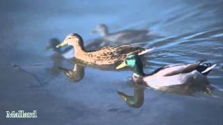 Birds of Whittier and Narrows/Lake Legg