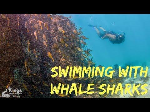 Whale Sharks, Exmouth & The Ningaloo Reef: S03 Western Australia E12 Road Trip Lap