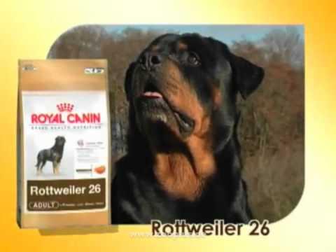royal canin breed rottweiler hundefutter youtube. Black Bedroom Furniture Sets. Home Design Ideas
