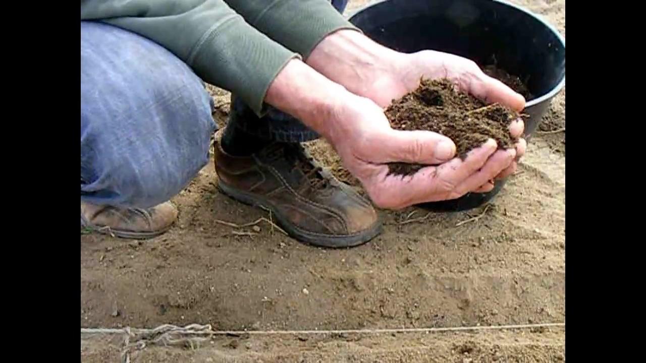 Semi de carottes en pleine terre youtube - Semis de carottes en pleine terre ...