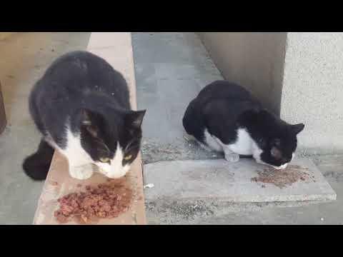 같이 먹자고 어미고양이 부르는 새끼고양이