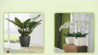 Видео-презентация кашпо Lechuza (Германия)(3 сентября 2010 года на ВВЦ в рамках XVII Международной выставки «Цветы-2010» прошла презентация официального..., 2010-09-25T20:31:59.000Z)