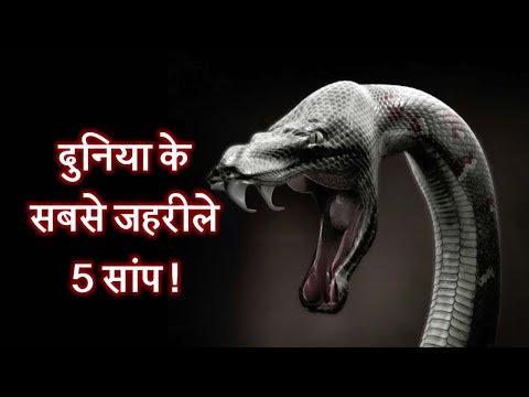 दुनिया के सबसे जहरीले 5 सांप ! | Top 5 most poisonous snakes in Hindi thumbnail