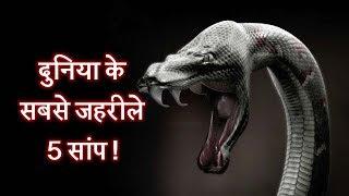 दुनिया के सबसे जहरीले 5 सांप !   Top 5 most poisonous snakes in Hindi
