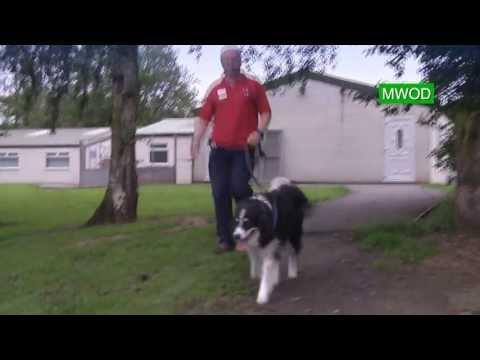 Border Collie Rescue Trust