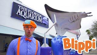 Blippi Visits Florida Aquarium! | Animals for Kids | Educational Videos For Kids