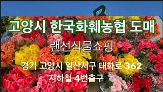 랜선식물쇼핑 고양시 한국화훼농협 하나로마트 화훼 집하장…