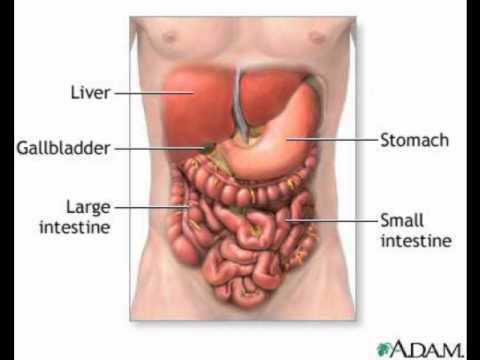 How digestion works stomach small intestine large intestine - YouTube