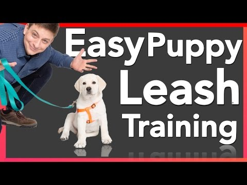 How to Leash Train your Puppy!