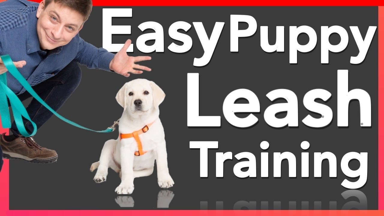 How to make puppy stop biting his leash
