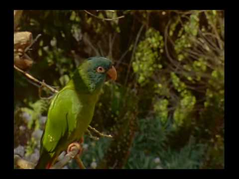 *# Free Watch The Wild Parrots of Telegraph Hill