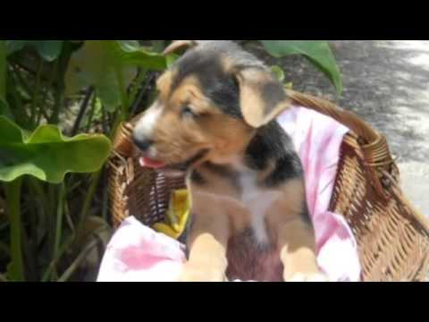 Conosciamo i cani meticcio youtube for I cani youtube