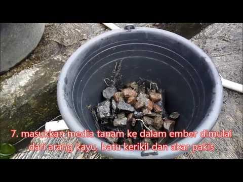 Tutorial cara membuat akuaponik mudah dan murah di dejeefish sukabumi