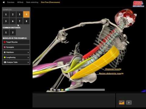 Bow Pose (Dhanurasana) | 3D Yoga Anatomy
