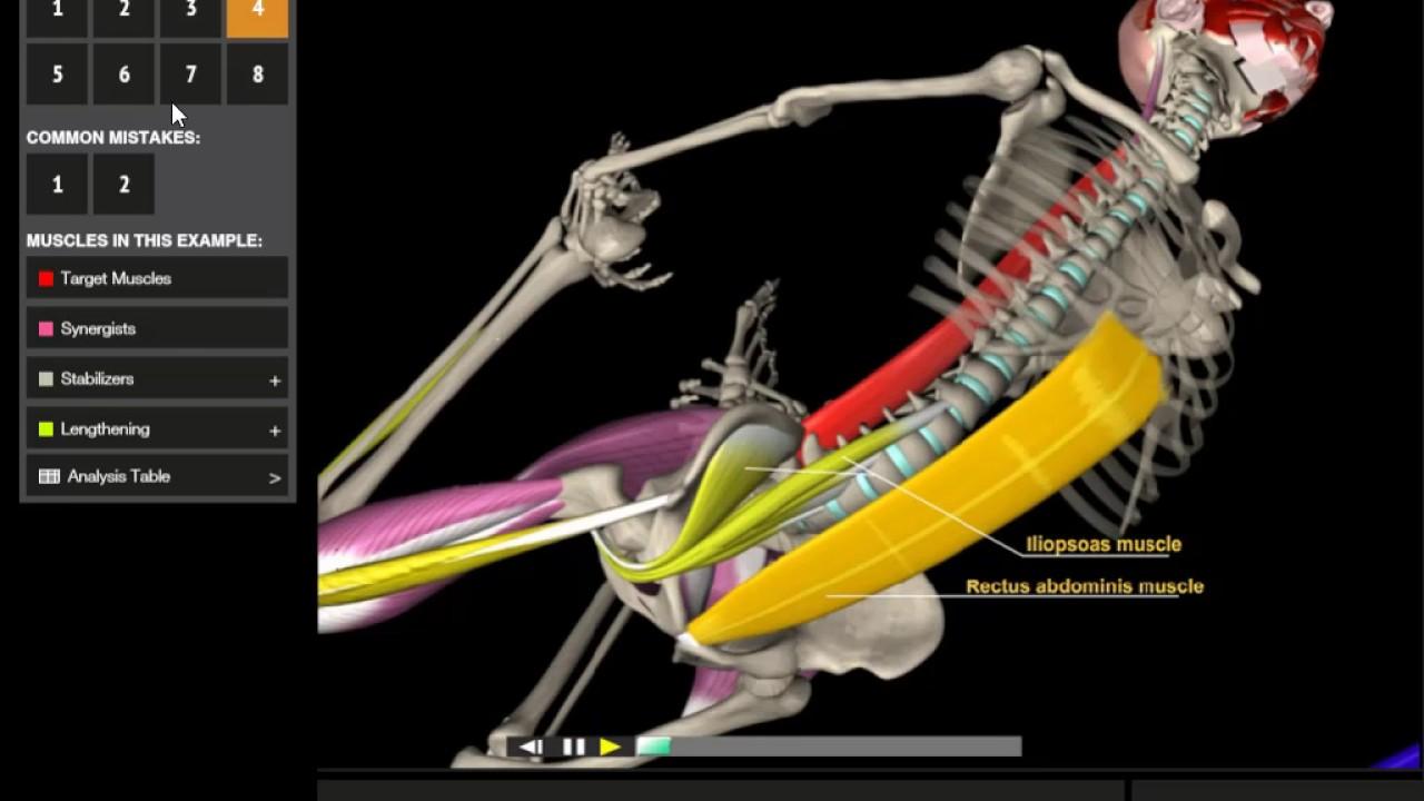 Bow Pose (Dhanurasana) | 3D Yoga Anatomy - YouTube