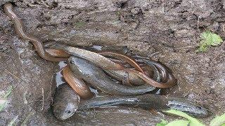 Traditional Fishing Deep Hole Fish Trap in Cambodia - Рыбалка видео - 釣魚視頻