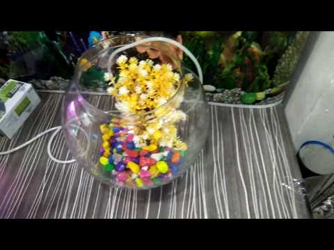 How To Make A Bowl Aquarium -try It Yourself