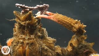 ちょっと美意識高い系?海藻やイソギンチャクでおしゃれに演出、カニたちの華麗なるカモフラージュの瞬間