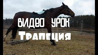 Видео урок- Обучение лошади трапеции