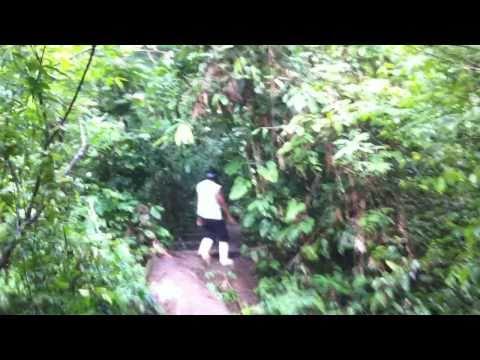 Amazon Rainforest: highland near San Rafael Village, Region Loreto, Peru