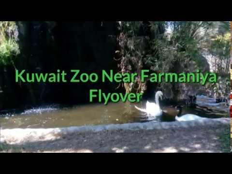 Kuwait Zoo Tourist Place  Farmaniya Kuwait City