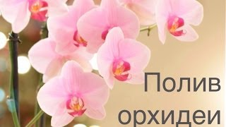 видео как поливать орхидею