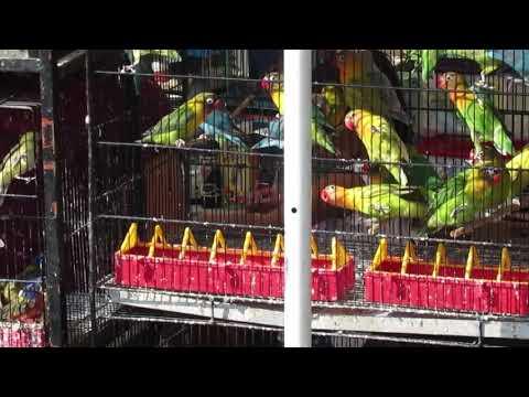 guadalajara,-jal.-venta-de-aves-en-mercado-de-san-juan-de-dios.