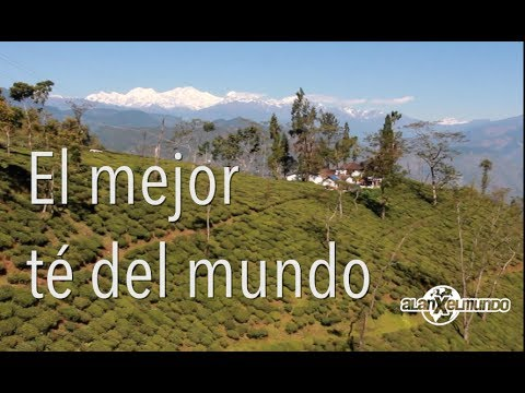 Hotel Chevalier (Sub. Español) - Wes Anderson from YouTube · Duration:  13 minutes 14 seconds
