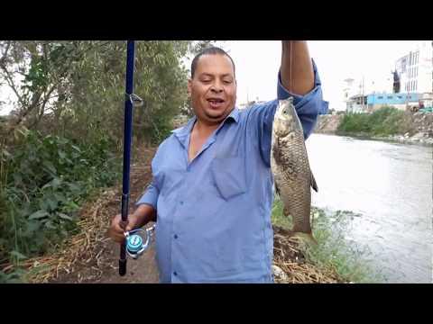 هل سمك المبروكة بياكل دود ارض