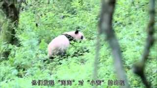 熊貓淘淘 Tao Tao Panda