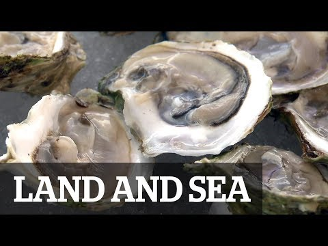 Land & Sea: Oysters